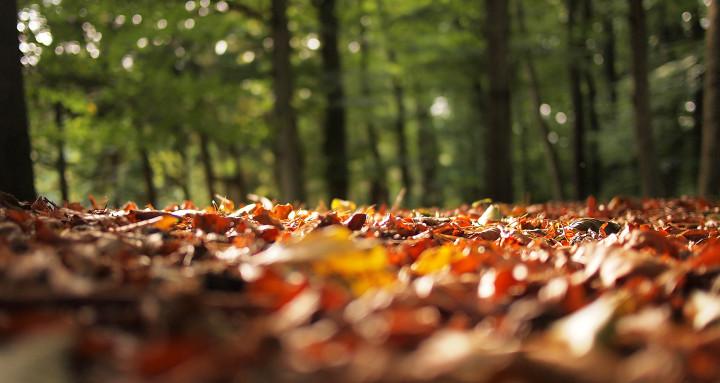 jesienne liście rozsypane wokół drzew
