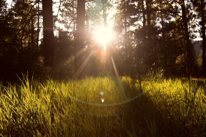 słońce między leśnymi drzewami