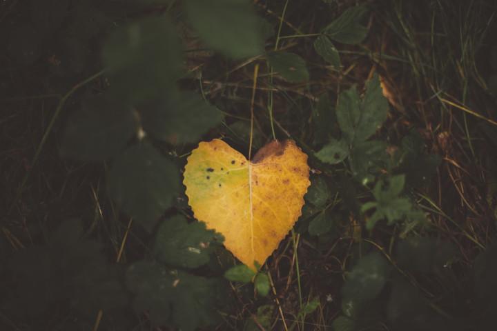 jesienny listek złote serce