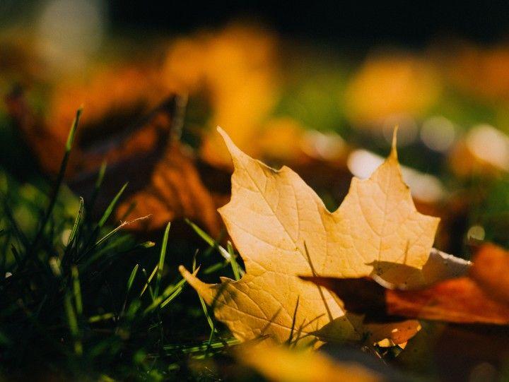 opadłe jesienne liście