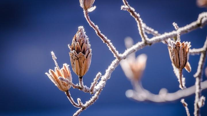 zmrożone gałęzie drzew zimą