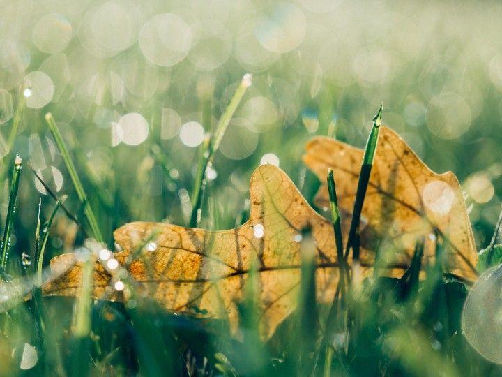 żółty liść pośród trawy