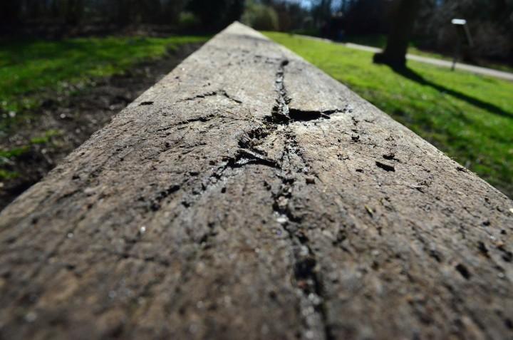 pień drzewa leżący w lesie jak równoważnia