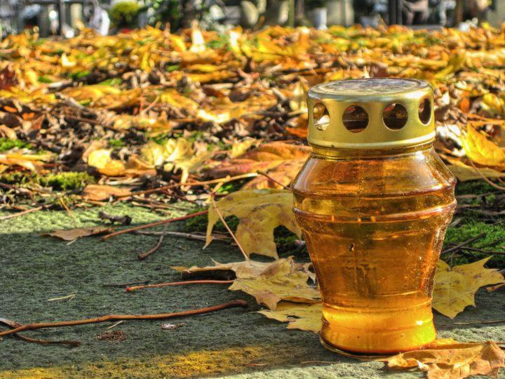 znicz pośród jesiennych liści
