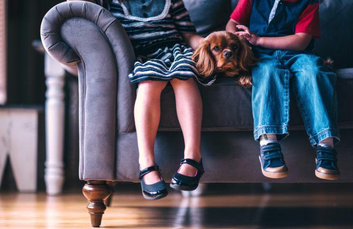 dziecięce nogi na kanapie i pies