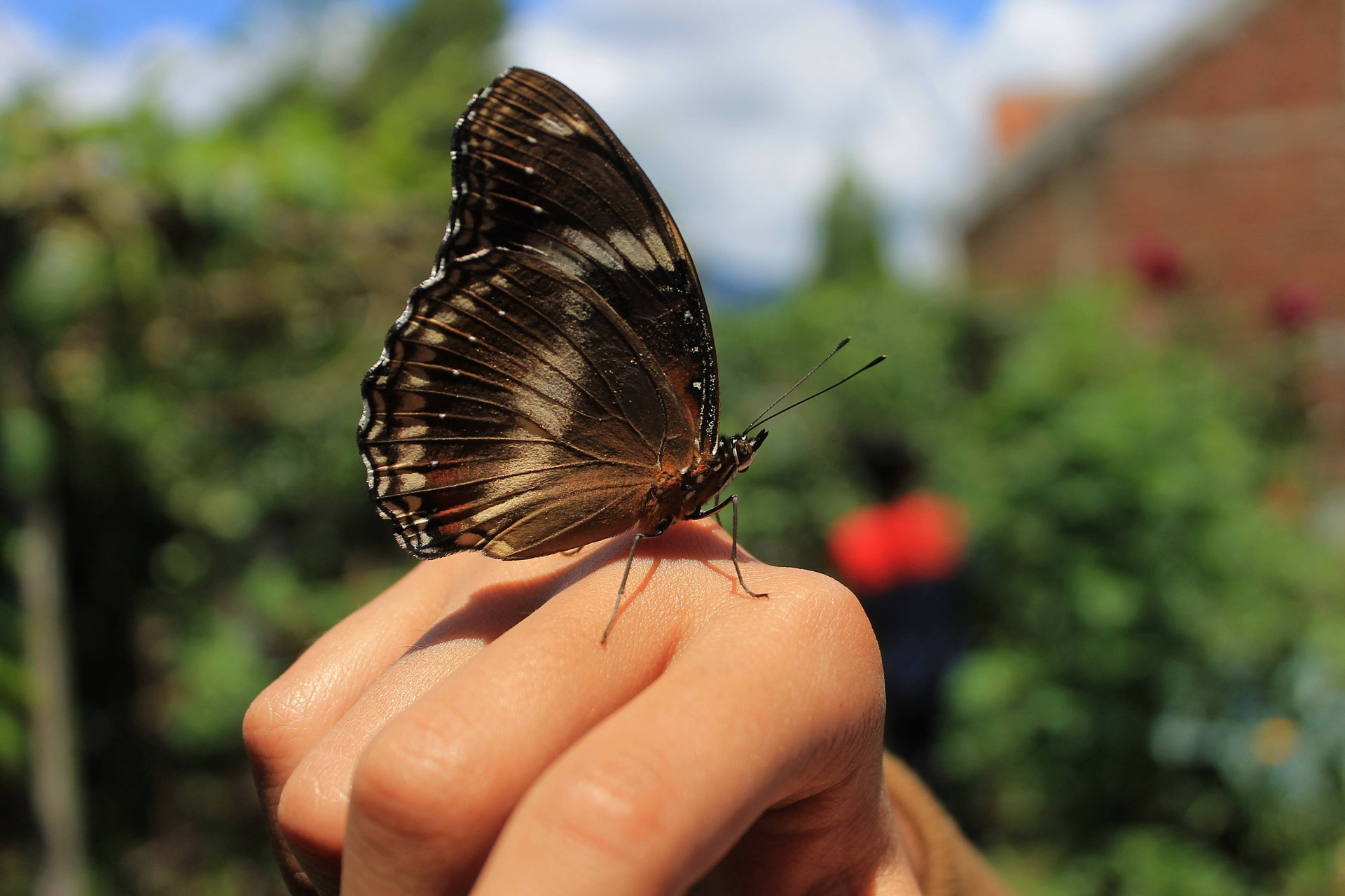 kolorowy motyl na dłoni