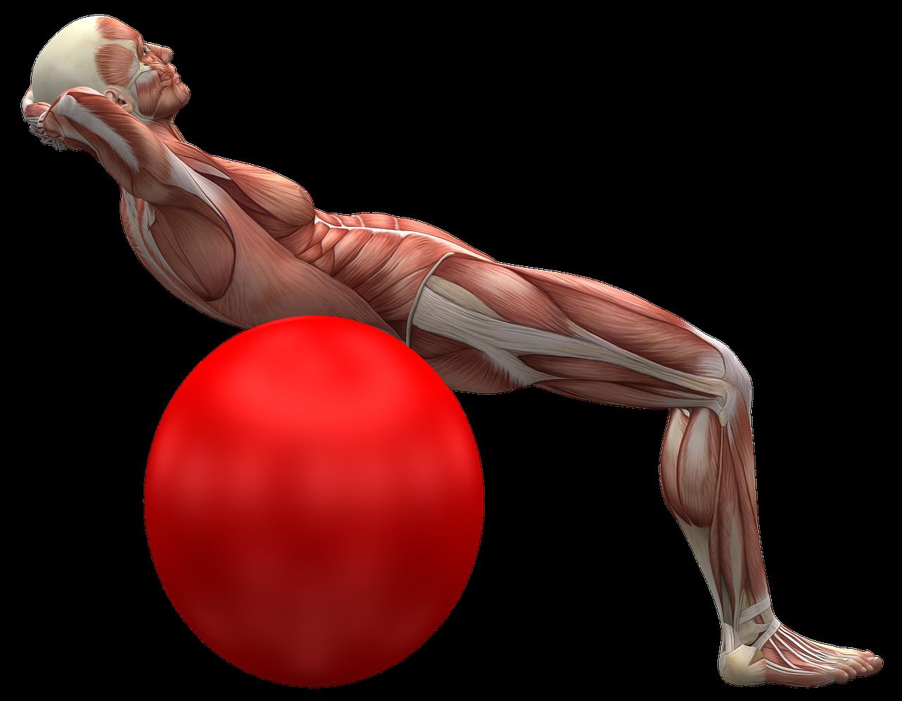 cwiczenia brzucha