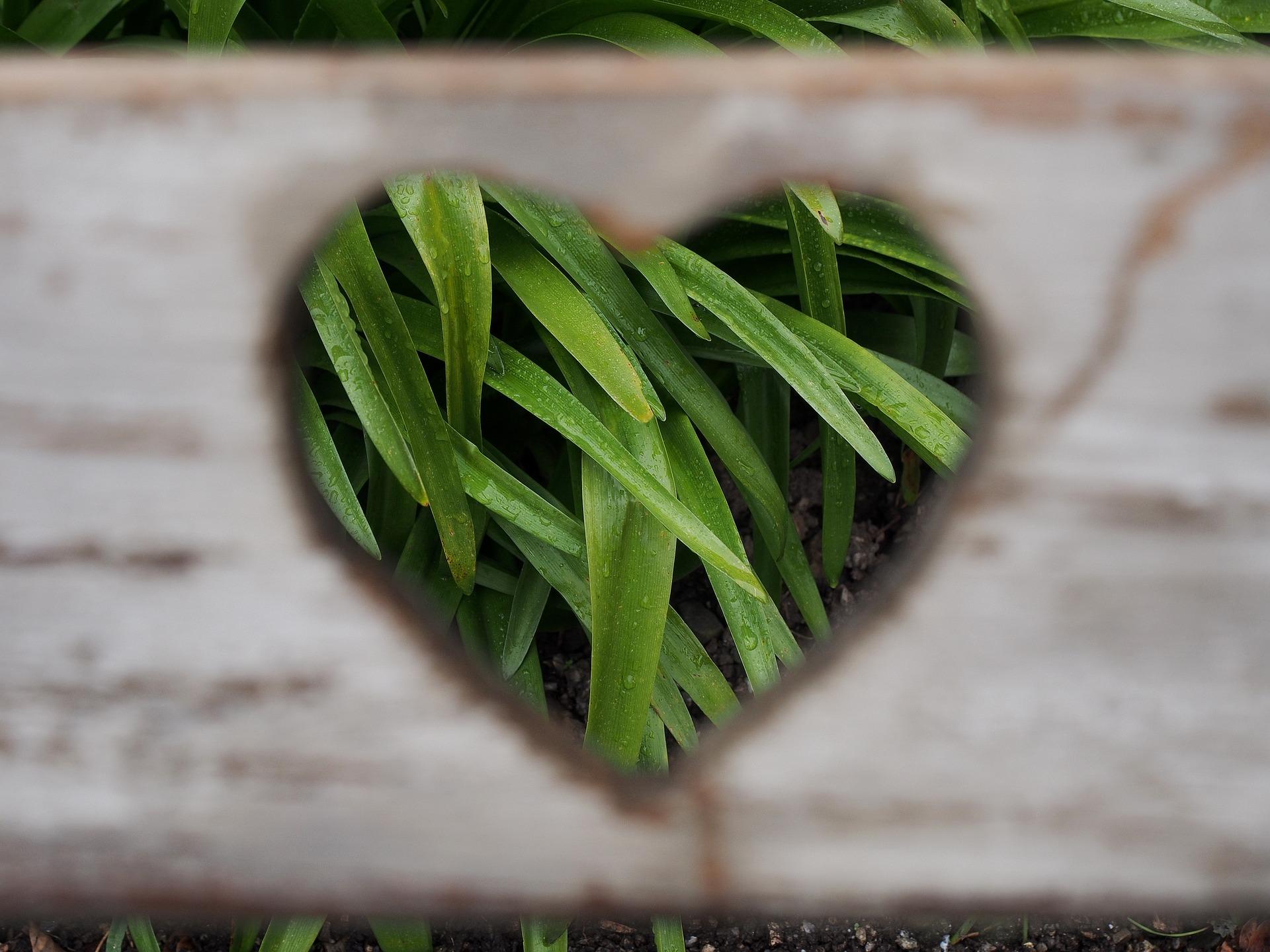 serce z zielonej trawy