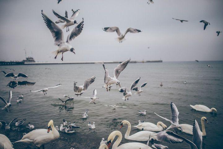 karmienie nadmorskich ptaków