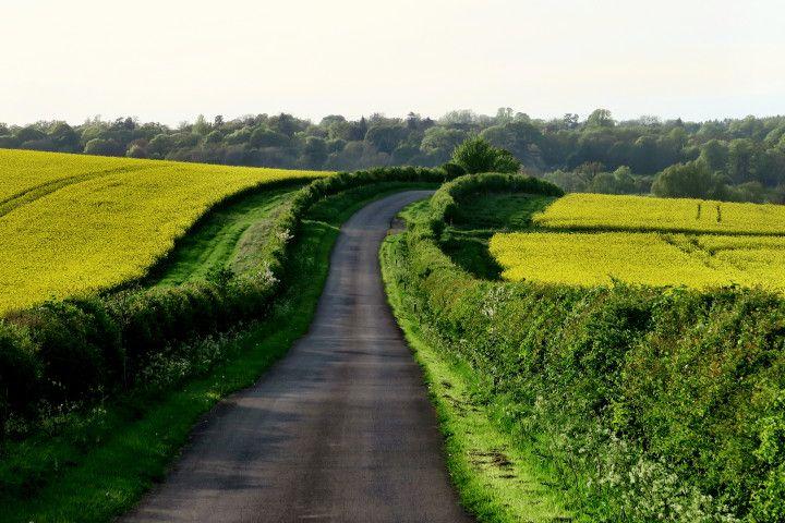 droga pośród traw