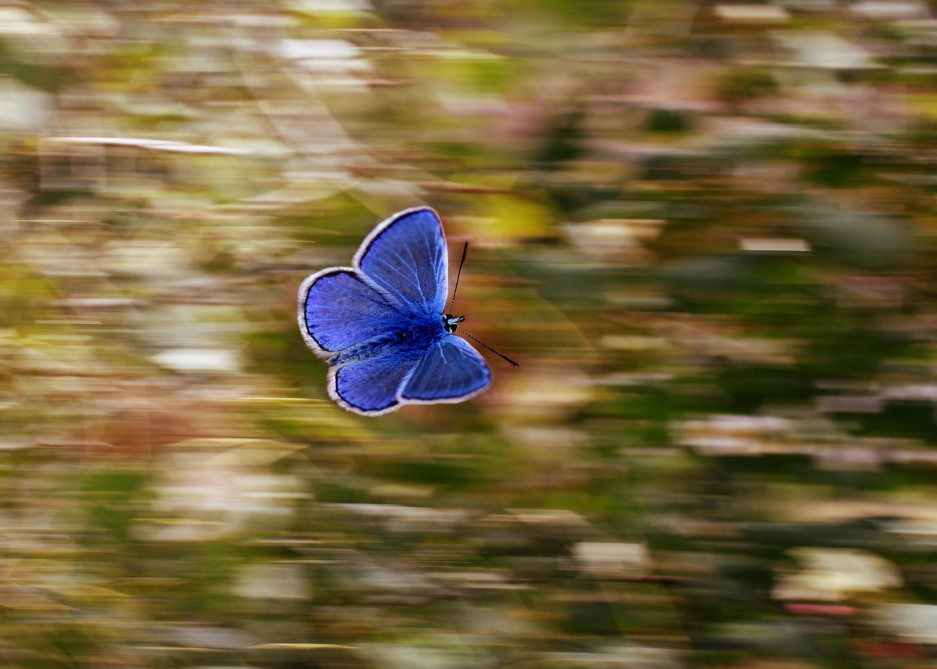 niebieski moty