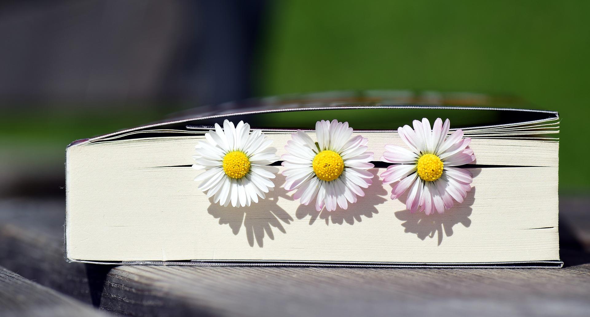 książka i stokrotki